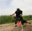 K9 deployment, training and sales